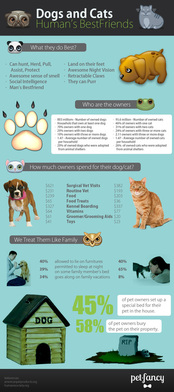 PetFancy infographics